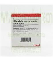 GLANDULA SUPRARENALIS SUIS INJEEL 5 AMPOLLAS 1,1 ML