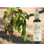 BACH WALNUT 20ML
